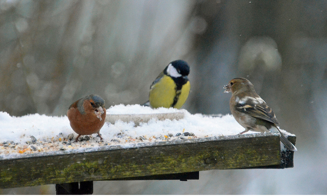 How to best prepare your bird tables and water baths for winter